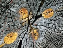 Cracked wood board. Old wood cut texture with knots and cracks royalty free stock photo