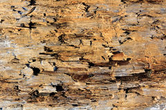 Old wood damaged by borer Stock Photography