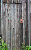 Old wood door with metal handle Royalty Free Stock Images