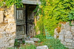 Old wood door overgrown by a fig tree. Old wooden entrance door from a abandoned house. a fig tree is growing over the wall into the house Stock Photo