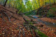 The old wood with dry trees. The old wood with the tumbled-down dry trees with a stream in mountains, autumn landscape Stock Image