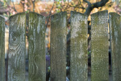 Old wood fence. Against trees background Stock Images