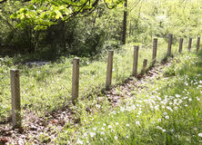 Old wood fence Stock Photo