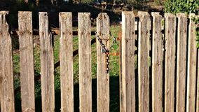 Old wood fence details Royalty Free Stock Images