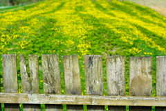 Old wood fence with a green field behind Stock Image