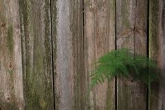 Old Wood Fence with Mold and A Fern Growing in IT stock photos