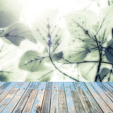 Old wood floor on Fresh green  leaves over blurred  background, Royalty Free Stock Images