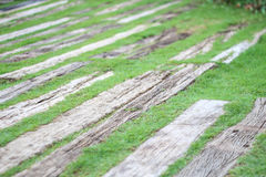 Old wood floor on green grass for background. Old wood floor on green grass in the park Stock Photography