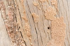 Old wood floor with termite nesting stock image