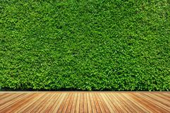 Old wood or flooring and plant in garden decorative Royalty Free Stock Image