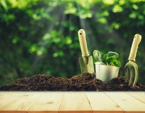 Old wood or flooring and plant in garden. Stock Photo
