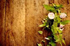 Old wood and flower vine background Stock Photos