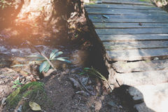 old wood footbridge in garden park Royalty Free Stock Photography