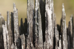 Old wood fracture. Photographed close-up of an old fracture of the tree, a small depth of field Stock Images