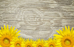 Old wood frame and background with sun flowers. Vintage style Stock Photos