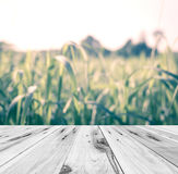 Old wood in front of blur vintage color nature of sugarcane farm Stock Image