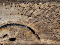 Old Wood Grain Cracks Texture, Wood texture, royalty free stock images