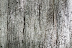 Old Wood grey textures Stock Photography