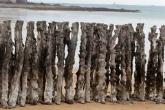 Old wood of a groyne Stock Photos