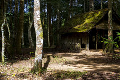Old wood hut in green forest  and light sun Royalty Free Stock Photography