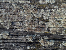 Old wood with lichen. Texture old wood with lichen Stock Photos