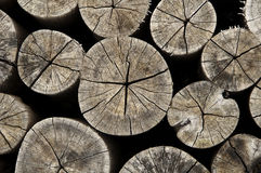 Old wood log cross section Royalty Free Stock Photos