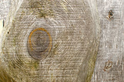 Old wood log texture royalty free stock photo