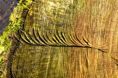 Old wood log texture background stock photos