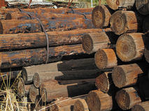 Old Wood Logs. Stock Images