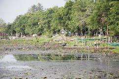 Old wood long tail boat stop at riverbank of Thale Noi lake Royalty Free Stock Image