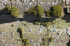 Old wood with moss Royalty Free Stock Images