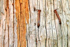 The old wood and nail. This is the old wood and nail that its the pole for the cottage in the rice field Royalty Free Stock Images