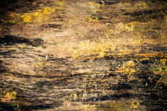 Old wood with paint Stock Photography