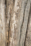 Old wood piles Stock Images