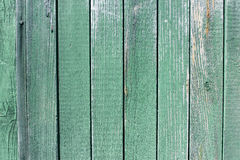 Old wood plank green texture background. Stock Photography