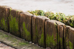 Old wood plank with scum and algae Stock Image