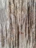 Old wood plank Stock Photos