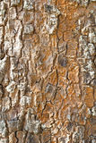 Old Wood(rind,bark) Tree Texture Background. Royalty Free Stock Photo