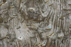 Old wood with rusted staples.  Royalty Free Stock Photos