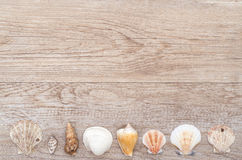Old wood with sea shells Stock Image