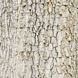 Old Wood. Seamless Tileable Texture. Stock Photography