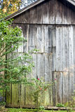 Old wood shed with a flowering bush Royalty Free Stock Photography