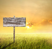 Old Wood sign with slope grass and sunset Stock Photography