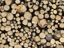 Old wood. Signed by the weather as old wood background stock image