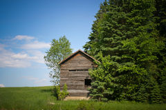Old Wood Small Cabin. A rustic tiny shack on top a the green grass hill partially hidden by tall green trees with a nice daylight clear blue sky in summer Royalty Free Stock Photography
