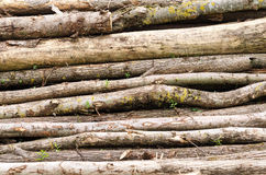Old Wood Stack With Trunks Royalty Free Stock Images