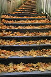 Old wood staircase covered in leaves Stock Photos