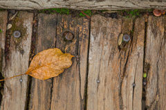 Old wood with steel nail and dry leaf Stock Photography