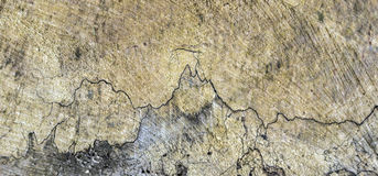 Old wood stem with harmonic structure Royalty Free Stock Photo