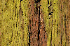 Old wood structure, cracked with moss cover Royalty Free Stock Photo